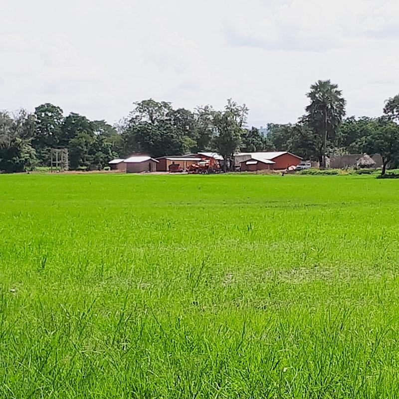 Farm Base, Dandakhori, Reoublic of Guinea