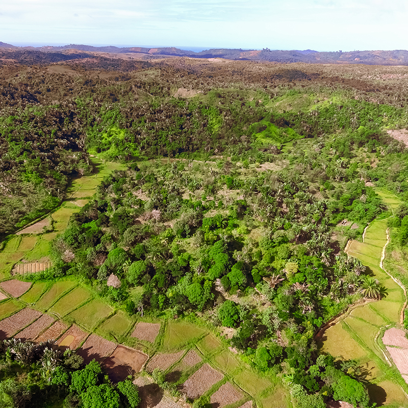 Plantation 125ha, Madagascar