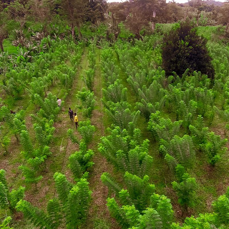 Plantation, Madagascar