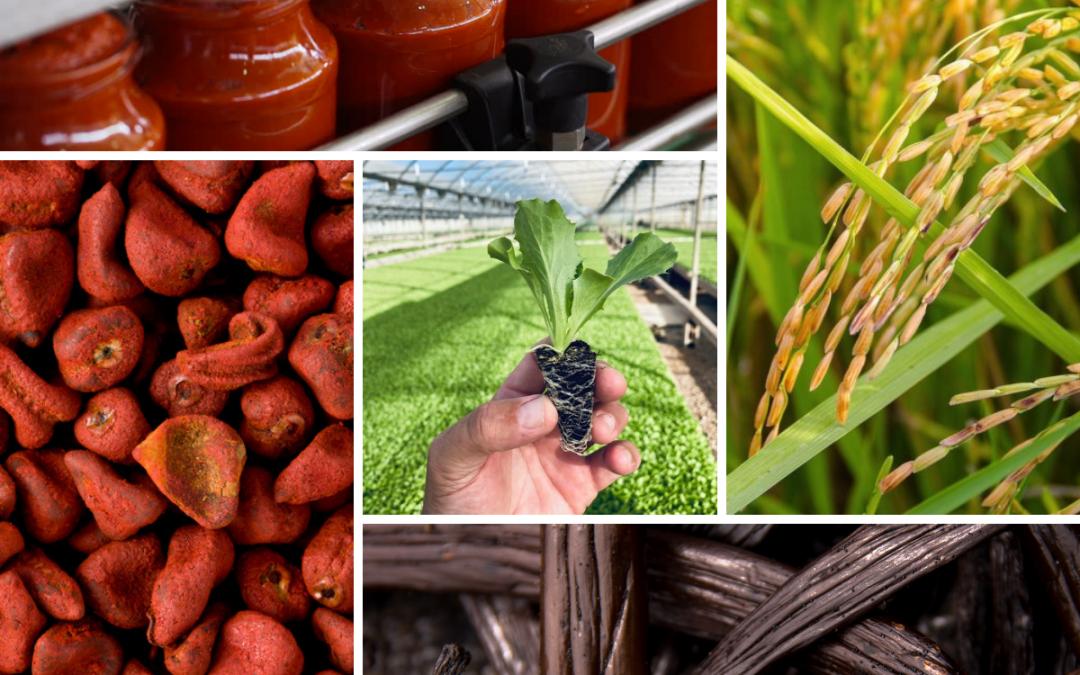 Agri Resources Group S.A. stellt Weichen für weiteres Wachstum durch Erweiterung der nachhaltigen Anbauaktivitäten und der Unternehmensstruktur