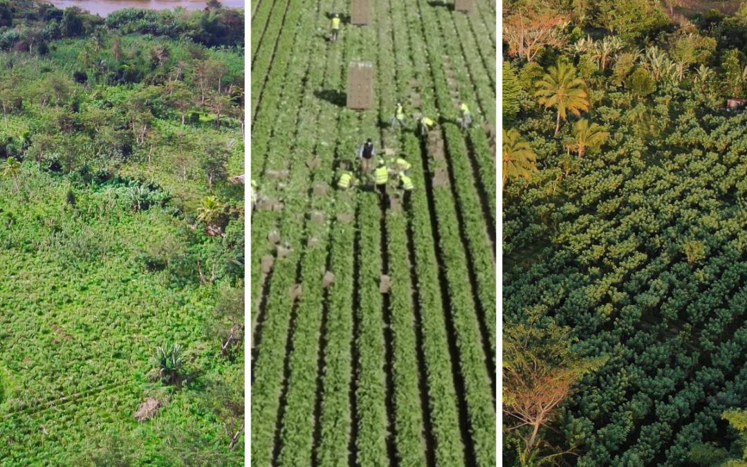 Agri Resources Group S.A. erzielt deutliches Umsatz- und Ertragswachstum im Geschäftsjahr 2020 – weiterhin sehr starke Eigenkapitalquote von 79,8 %