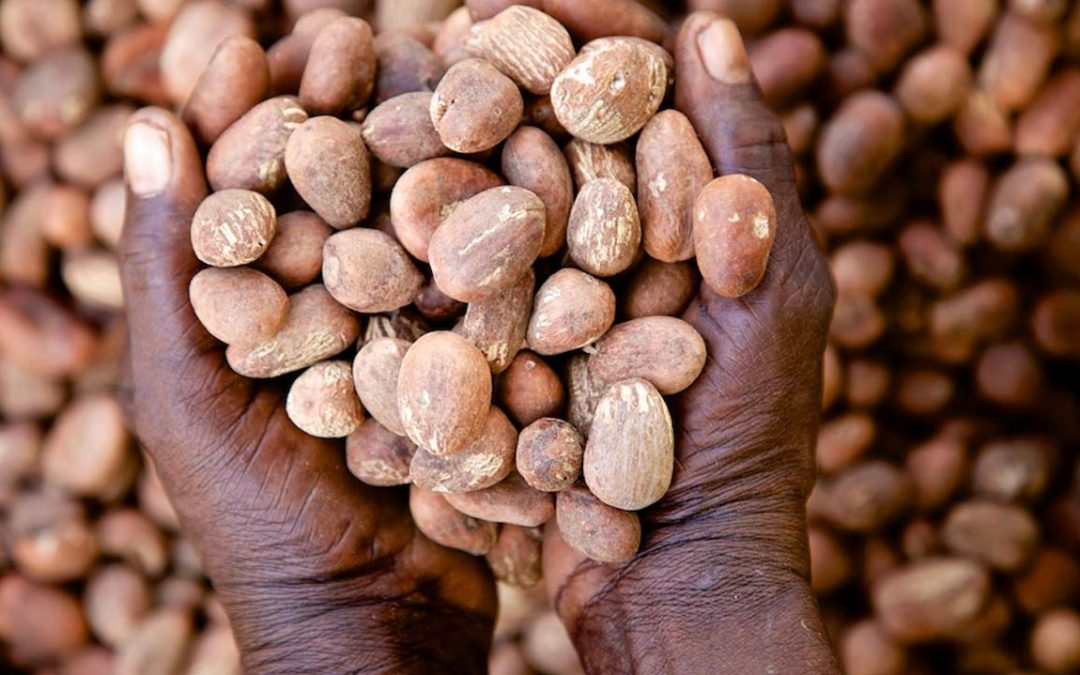 Prang Agro Resources is launching a sustainable shea sourcing project in Ghana