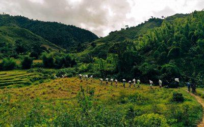 Campagne de Vanille Verte, Madagascar 2021 – Interview avec Alissa Hervouët, Directrice des Opérations chez Agri Resources Madagascar