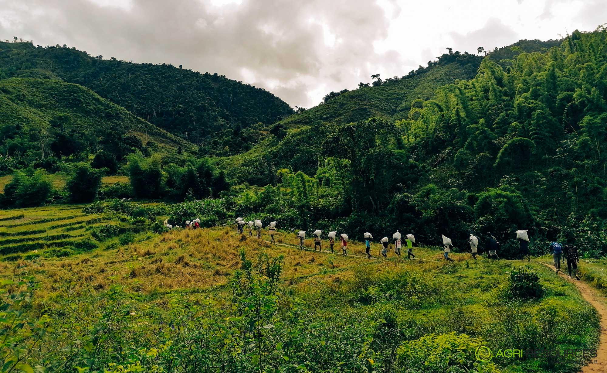 Green-Vanilla-Campaign-2021---Agri-Resources-Madagascar-1