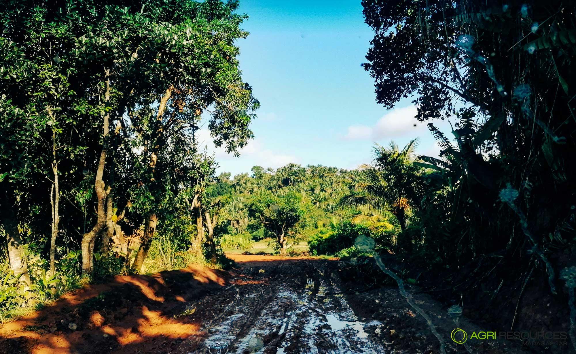 Green-Vanilla-Campaign-2021---Agri-Resources-Madagascar-10