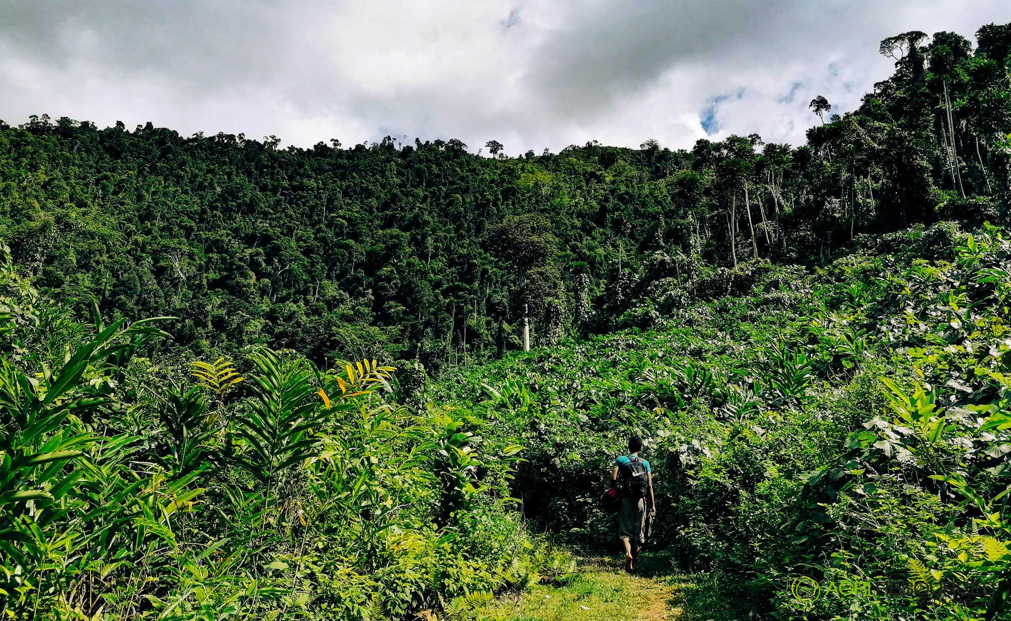 Green-Vanilla-Campaign-2021---Agri-Resources-Madagascar-4
